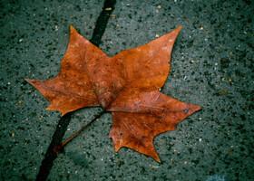 Листья с разных частей света