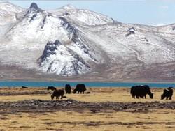 В Тибете построят аэропорт на высоте более 4 тысяч метров