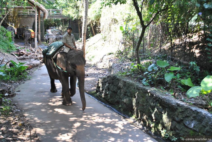 Первым делом - неспешная прогулка на слоне.