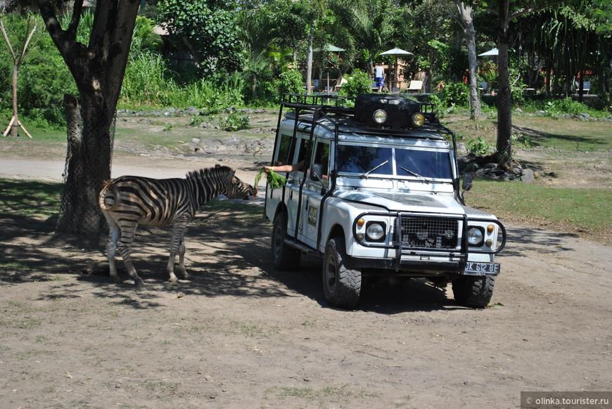 Видели как другие туристы из джипа кормят морковками зебр, а потом и сами участвовали в процессе.