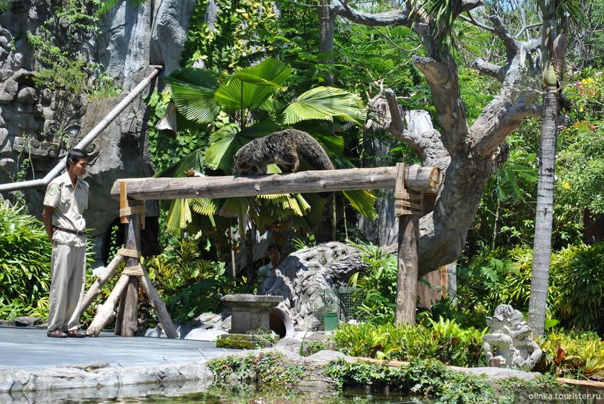 После катания на слоне, смотрели шоу-программу про птиц и животных.