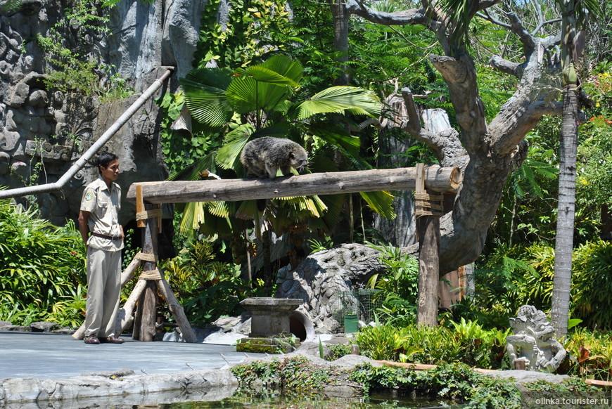 Над нами летали стаи птиц, по сцене бегали хомяки и обезьяны. Рассказывали и показывали грацию и навыки, которые заложены в животных самой природой. Например, обезьяны показывали, как забираются на пальмы и разбивают о камень кокосы.