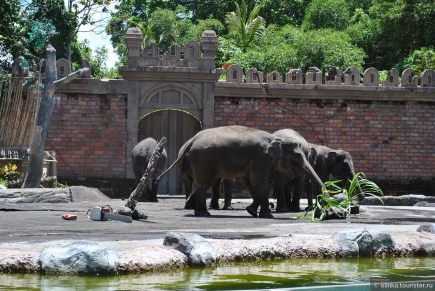 Затем прошли на представление слонов. Небольшая история про то, как жили слоны, потом пришли люди и выгнали слонов, потом слоны помогли людям и стали жить в мире и согласии.