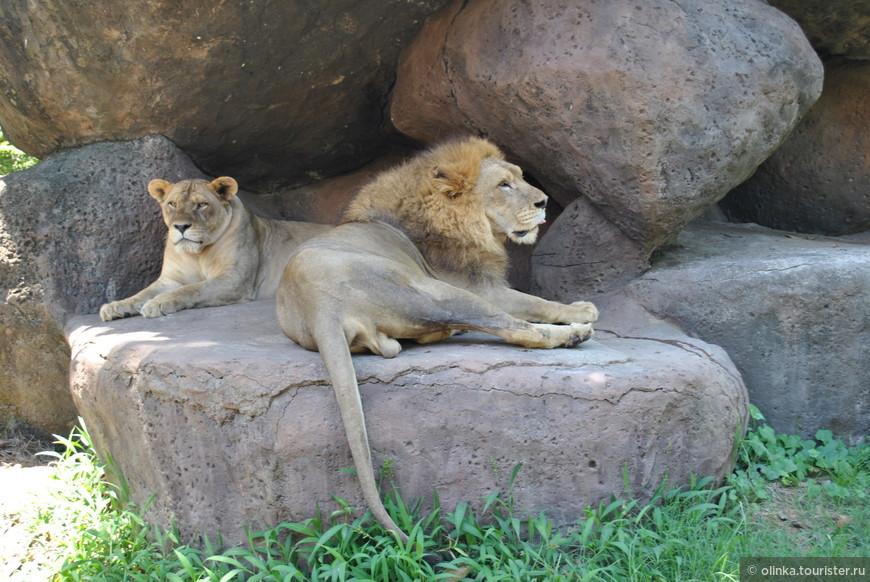 После поездки, перекусили в кафе. Кафе находится около лежанки львов.
