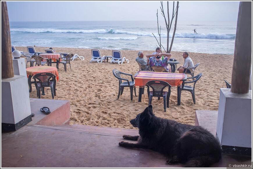 Наш отельный пес. Вид из ресторана отеля.