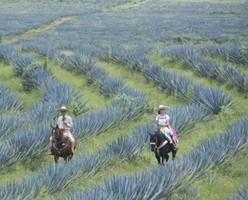 В Мексике на Маршруте Текилы появится город для туристов