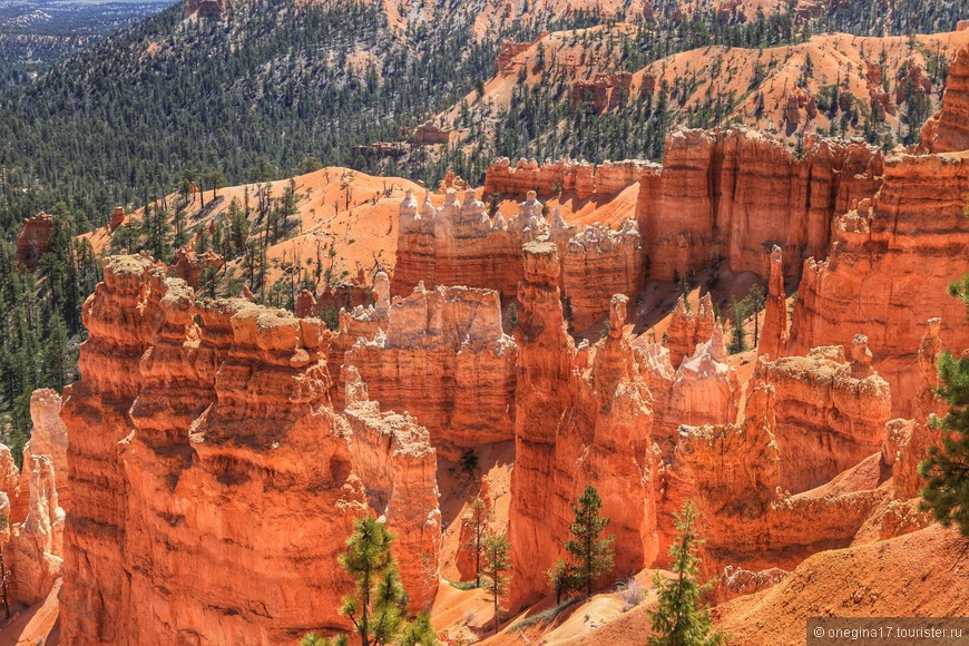 Необычно-оранжевые скалы - визитка Брайса.