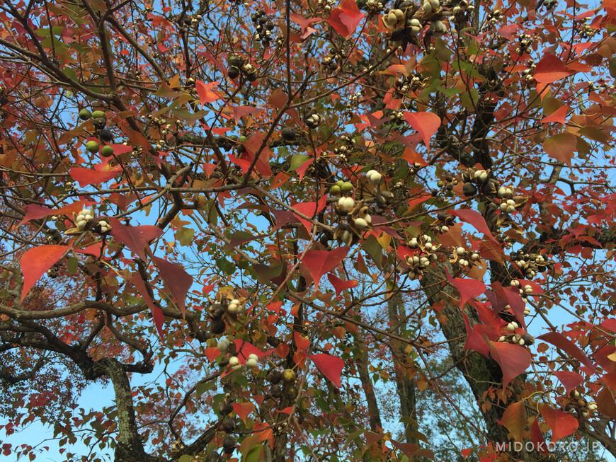 Листва в парке уже начинает краснеть, предвещая скорое буйство и пестроту красок окрестных гор.