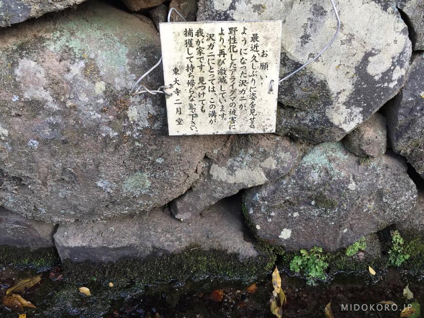 В канавке неподалеку водятся пресноводные крабы и администрация храма просит прохожих их беречь.