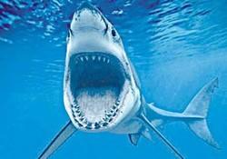 Египтяне выяснили причины нападения акул