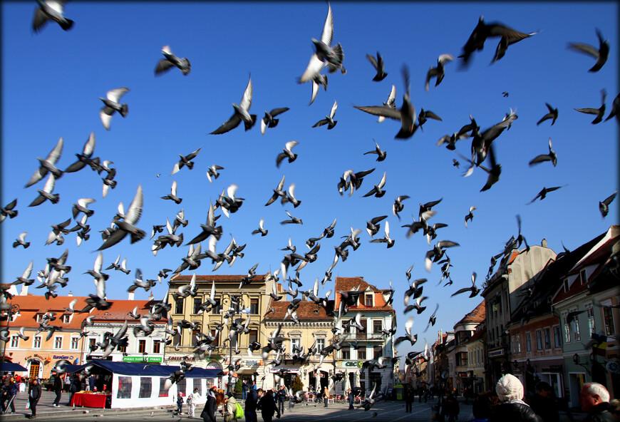 В составе туристической группы, за совсем короткий промежуток времени, я посетил несколько городов: Бухарест, Синая, Брашов, Бран и мало примечательный курорт Ковасна. Начать я решил с одного из красивейших городов этой страны — Брашова.
