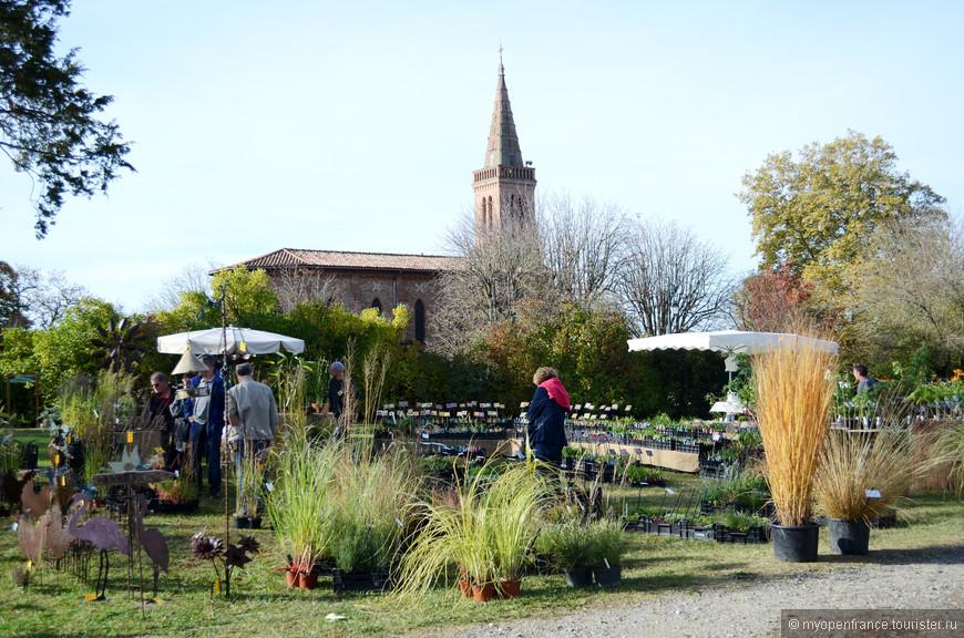 злаковые культуры нынче в моде в садовом дизайне
