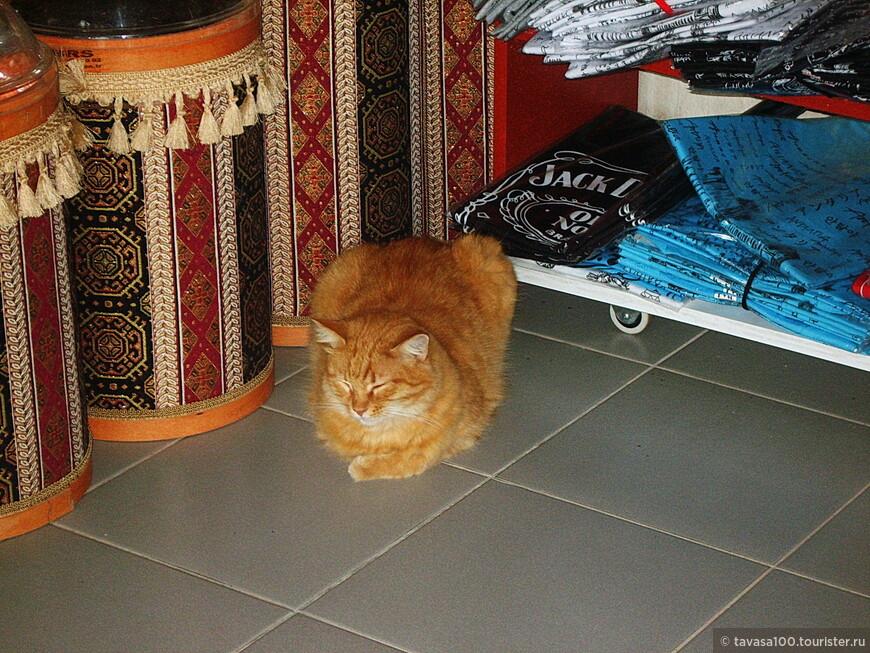 Кошек в Кирише очень много, они везде- на улицах, в отелях, в магазинах.