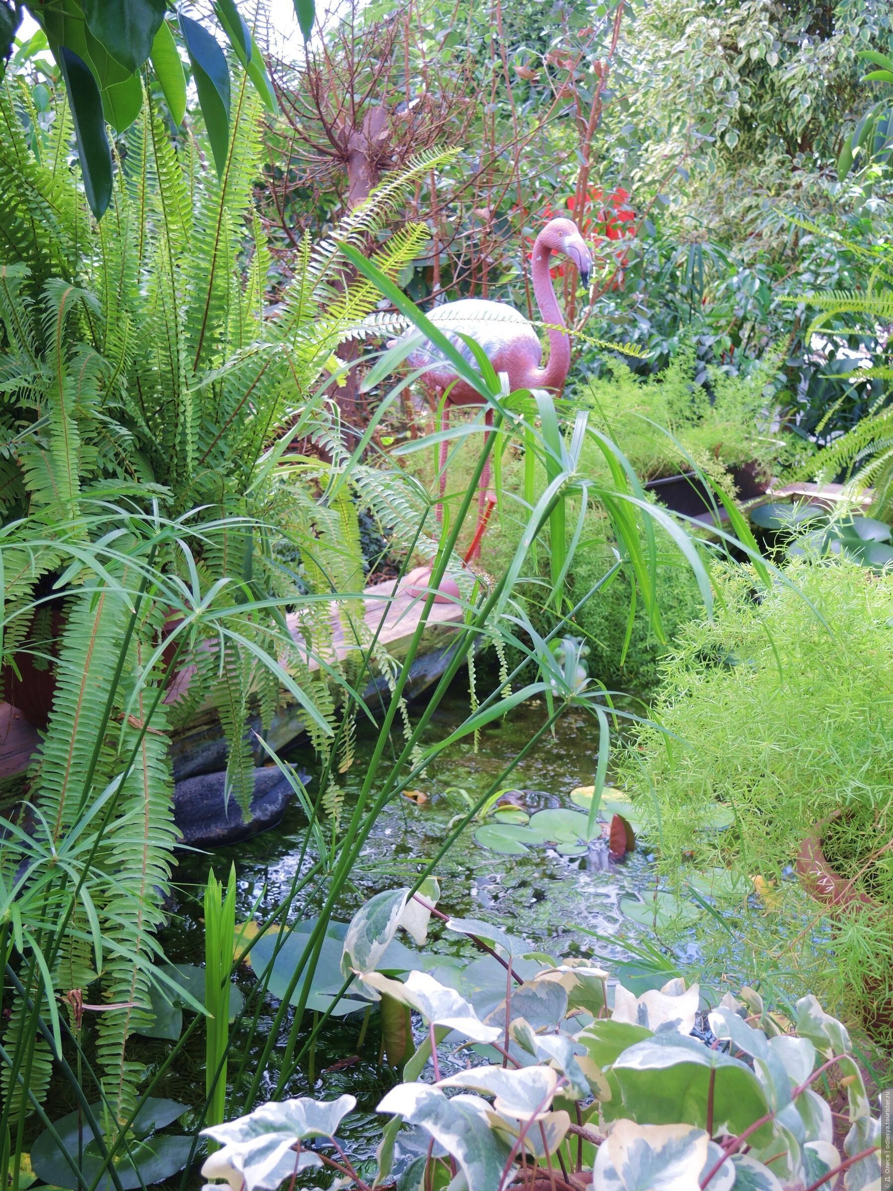 """Фото из альбома """"Ботанический сад"""", Кемерово, Россия"""