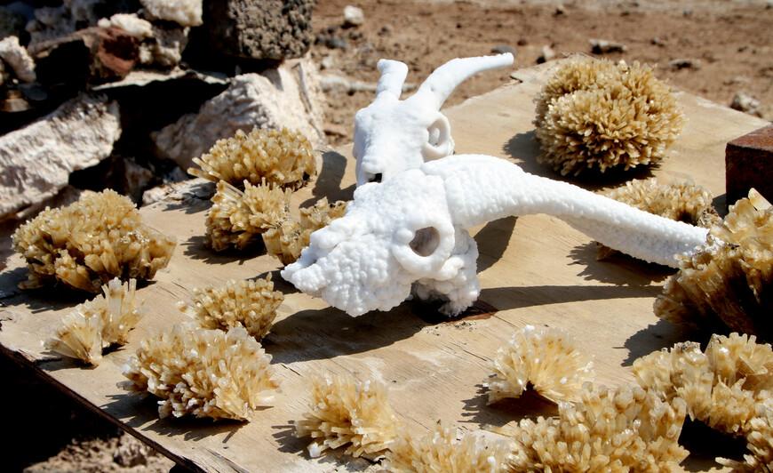 Наиболее интересным сувениром является любой предмет, который на время поместили в озеро, чтобы он покрылся солью. Я видел детские игрушки и наиболее популярные — черепа животных.