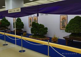 Фоторепортаж с выставки бонсая