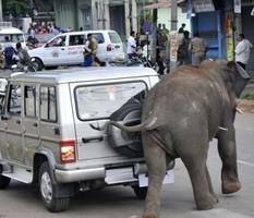 На Шри-Ланке дикий слон насмерть затоптал паломников