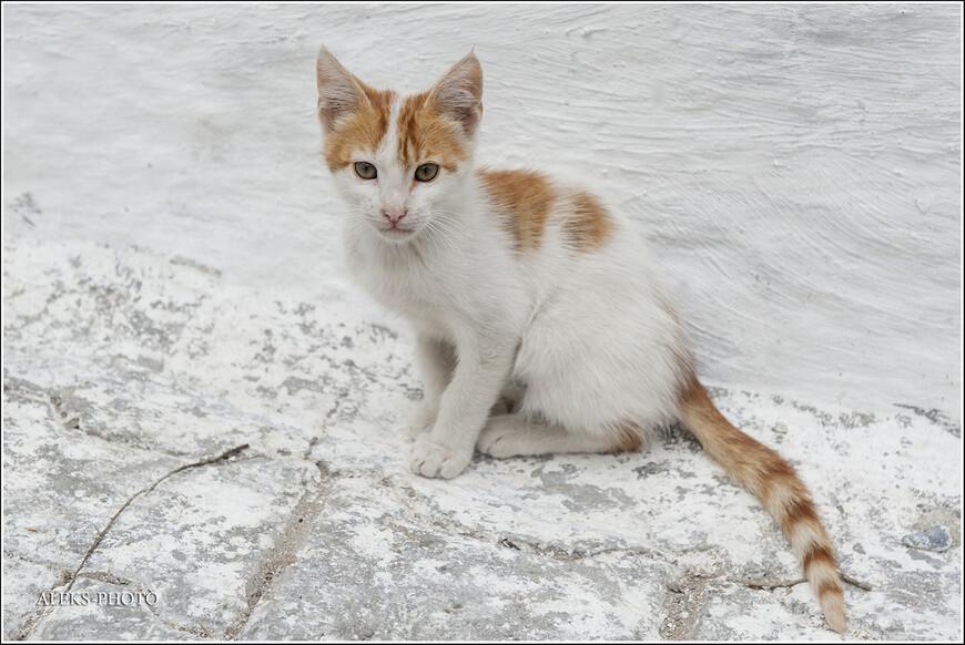 Вот, например, в Аземмуре нет океана, зато есть крупная река, впадающая в океан. Ну, марокканские кошки - будут вечными вашими спутниками в путешествии...
