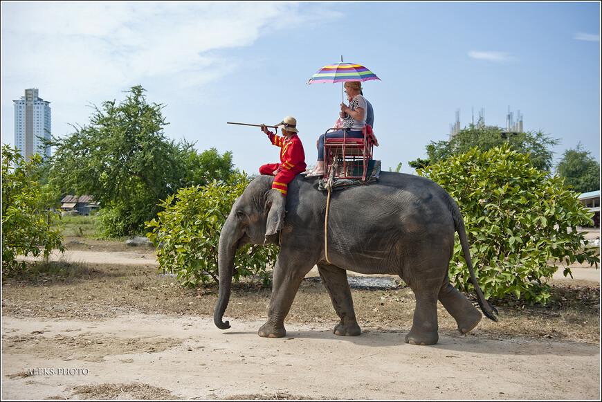 Погонщик сидит почти на голове у слона. На самом деле, видимо, - на шее.
