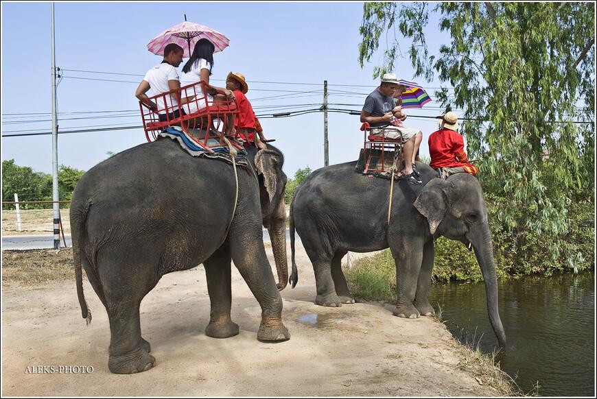 Всегда интересно наблюдать, как слоны пьют.