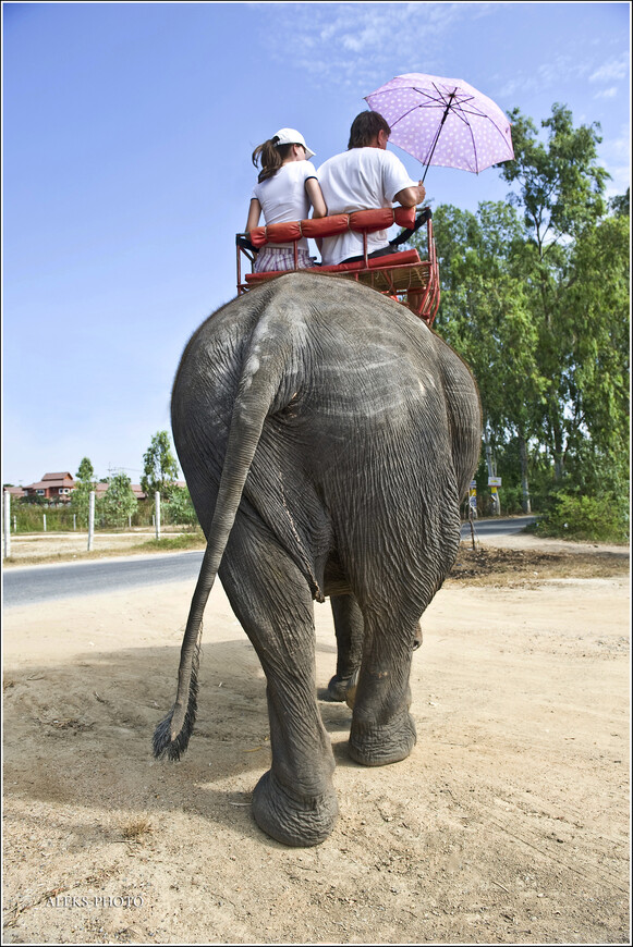 Так, посмотрели на вид сбоку. Теперь - заглянем сзади. Что ж, очень даже ухоженный слон. Не то, что наши коровы, которых мы иногда ездим снимать в репортажах в наши хозяйства. У тех бедняг - вся попа грязная и никто их не моет...