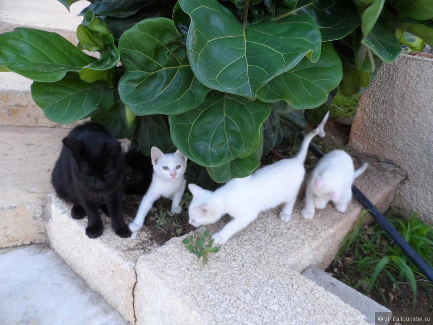 Кошки чувствуют себя хозяйками острова.