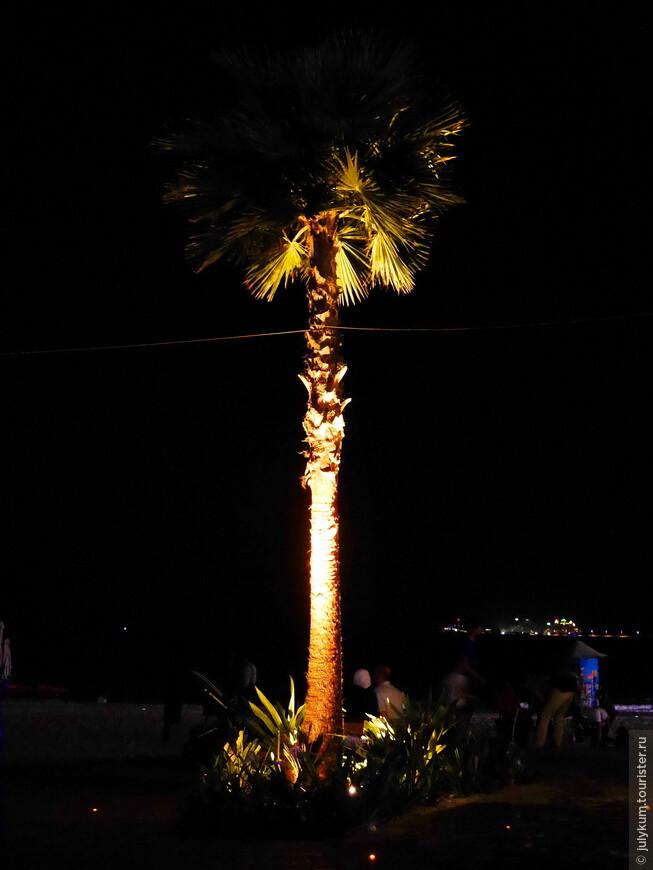 Одинокая пальма.