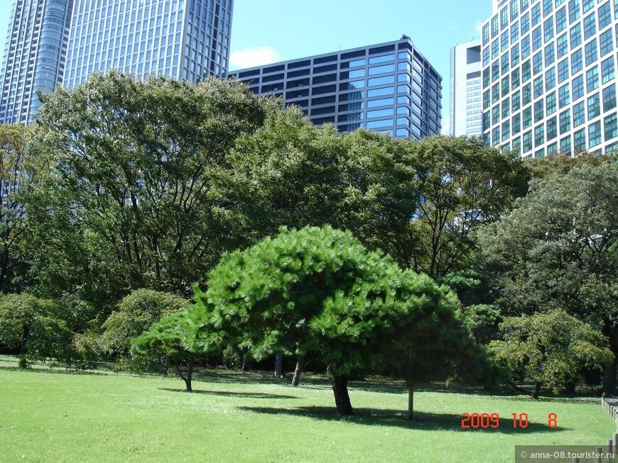 После того, как Эдо стал военной столицей Японии, заболоченный участок земли в устье реки Сумида был объявлен владением сёгуна стал использоваться кланом Токугава для соколиной охоты.