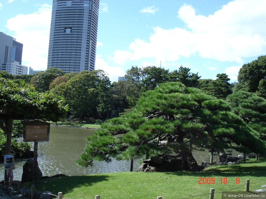 """После реставрации Мейдзи (1868 г.), земля перешла во владение Императорского двора. Сад привели в порядок, и он стал местом для развлечений императорской семьи, а его стали называть """"Hama-rikyu""""."""