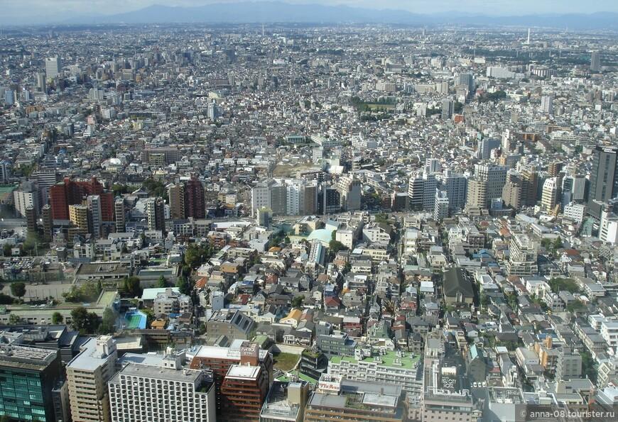 В башнях главного здания Токийского муниципалитета на 45 этаже на высоте 202 метра  находятся смотровые площадки-близнецы.  Скоростной лифт доставляет посетителей на 45 этаж за 55 секунд. Площадки открыты ежедневно с 9:30 до 22:30, кроме понедельника, посещение бесплатное.