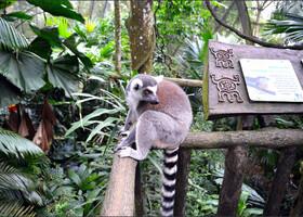 Зоопарки Сингапура