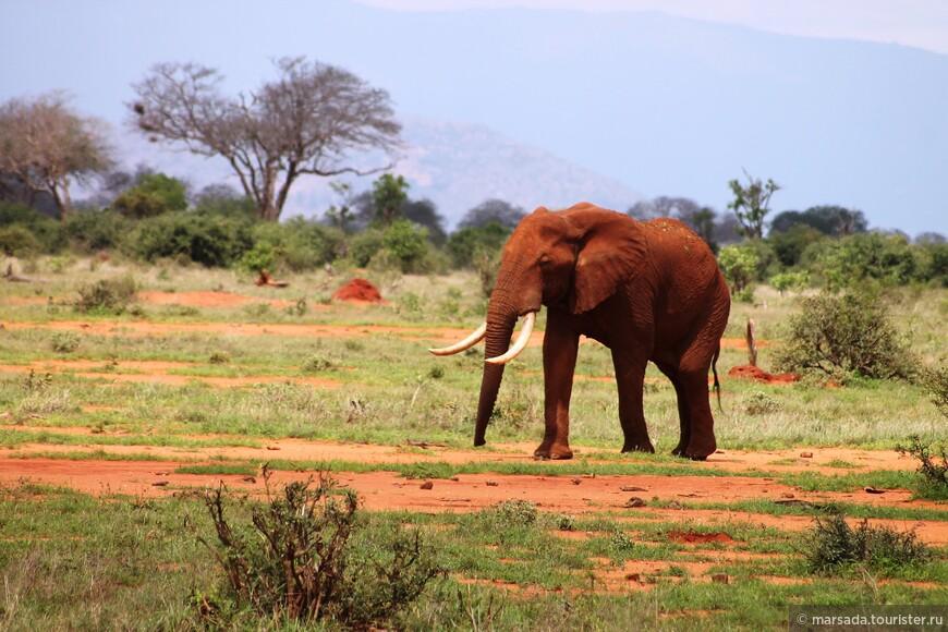 слонов там великое множество