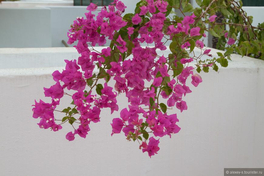 Вот такие растения поднимались на террасу над нашим номером