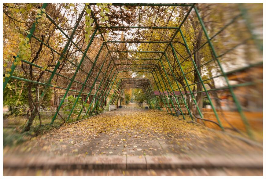 Приходите летом,туннель из виноградной лозы -чудесное спасение от жары.
