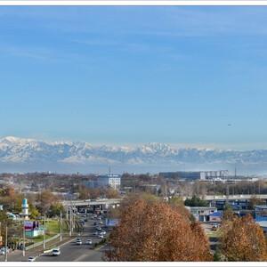 Ташкент повседневный.