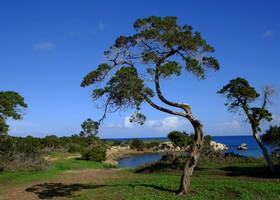 Северный берег полуострова Акамас. Akamas