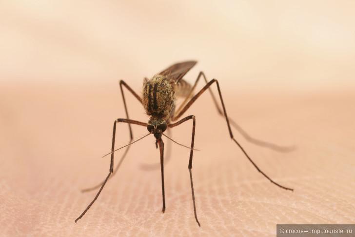 Профилактика малярии