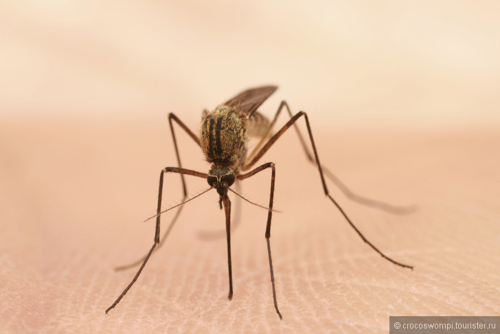 Таблетки против малярии 4