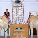 Музей верблюда
