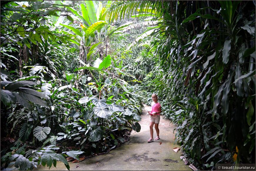 Чуть отойдешь в сторону с прогулочных дорожек - и вот такие заросли. Настоящие джунгли.