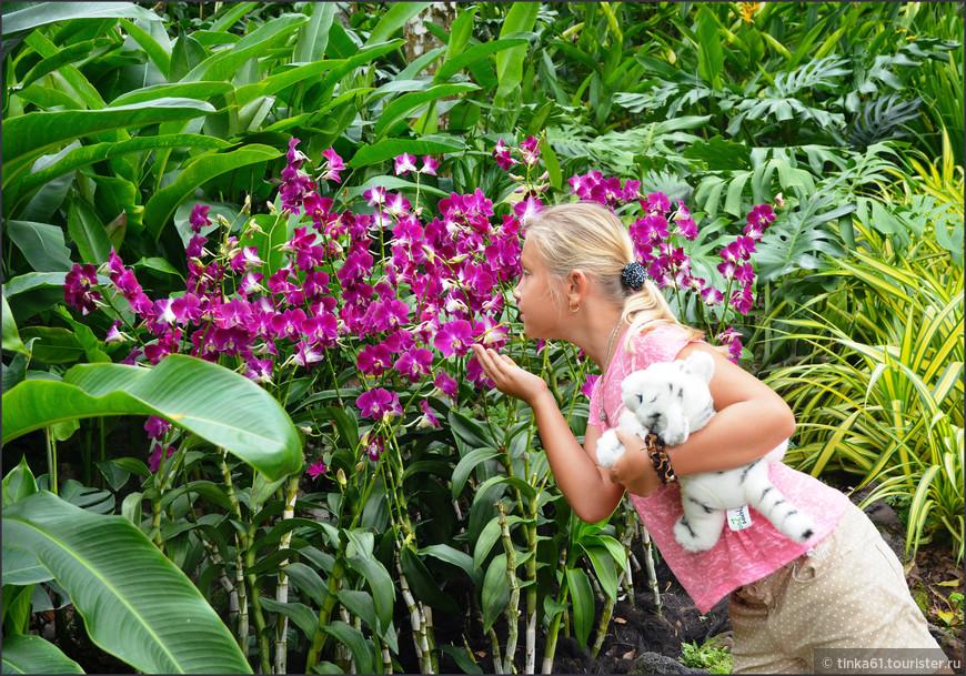 Вот и красавицы орхидеи. Как не понюхать!