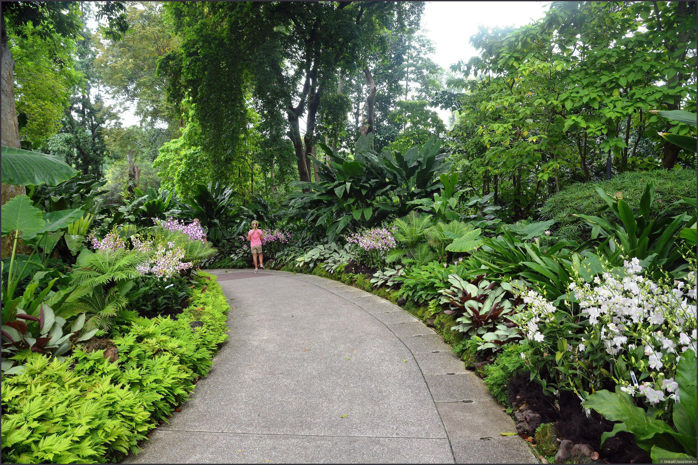 фото тенелюбивых садов сингапура этом все время