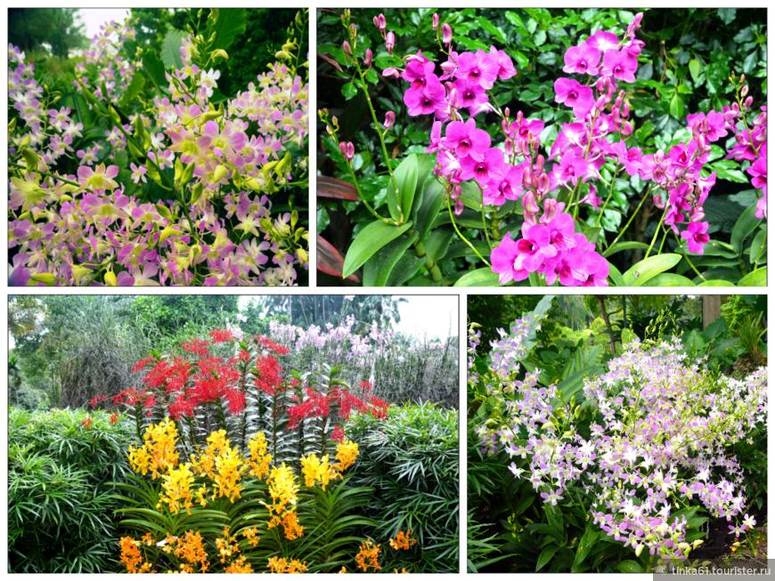 Разнообразие сортов орхидей впечатляет.