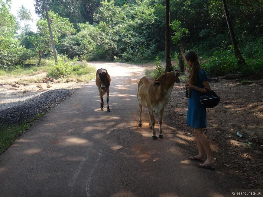 Первое знакомство со священными животными