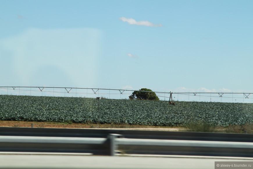 На ходу сняли поливальные машины на полях - видно не очень, но это капуста. При своем жарком и довольно сухом климате Испания поставляет немало овощей на экспорт.