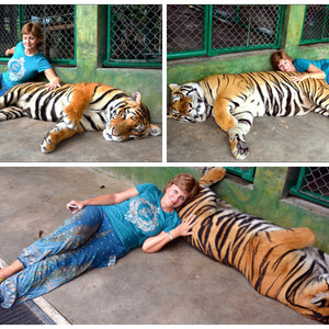Можно запросто поваляться с тиграми.