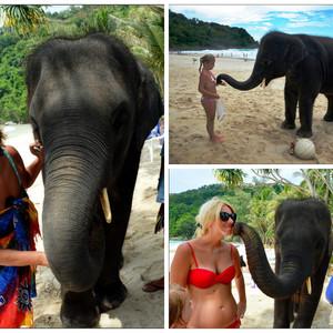 И ещё. Этого слоненка приводили каждый день на пляж отеля. Его можно кормить, гладить и даже целоваться с ним.