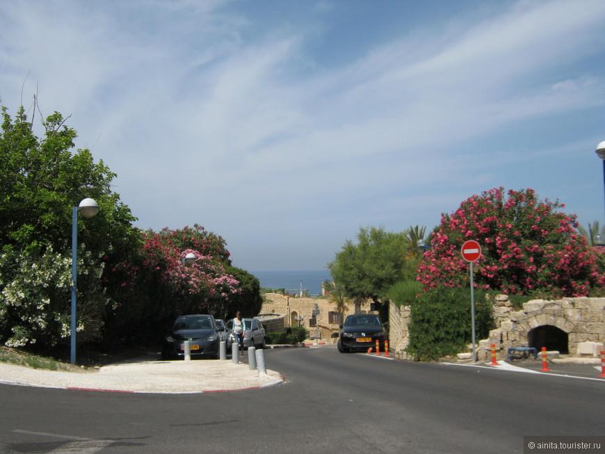Яффо, дорога в порт, и всюду цветущая бугенвиллия.
