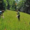 мы собираем травы