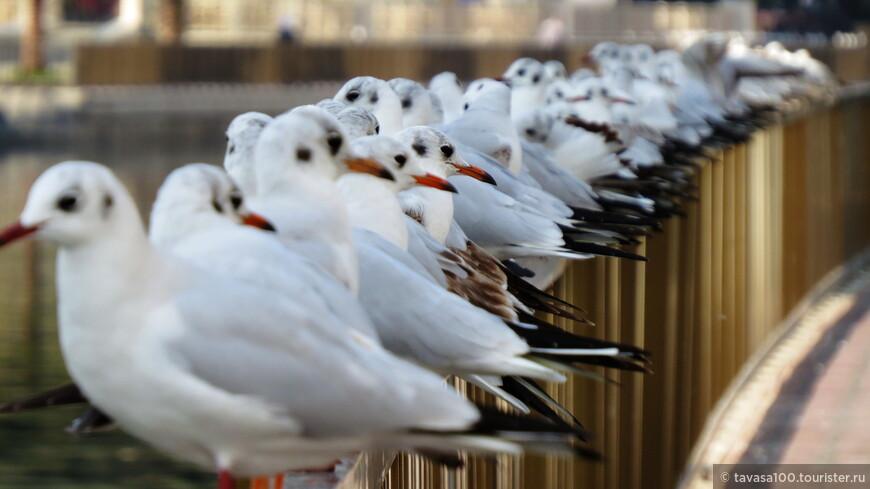 Упитанные птички!